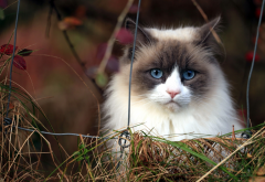 cat, fence, animals, grass, grumpy cat,  wallpaper