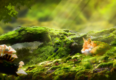 fox, forest, moss, sun rays, animals, nature wallpaper