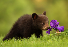 animals, bear cub, grass, flower, iris, bear wallpaper