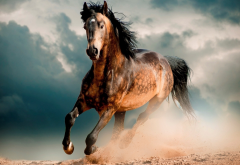horse, mustang, desert, animals wallpaper