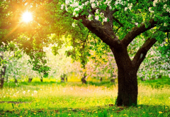 tree, spring, sun, flowers, grass, nature wallpaper