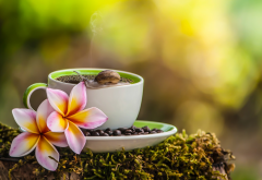 cup, coffee, grain, moss, flowers, plumeria, frangipani, snail wallpaper