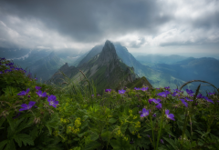 switzerland, alps, mountains, forest, overcast, clouds, nature wallpaper