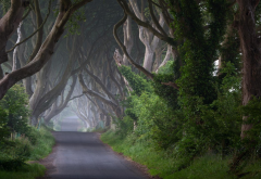 path, nature, landscape, trees, ireland wallpaper