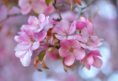 nature, spring, bloom, flowers wallpaper