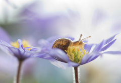 macro, flowers, snail, nature wallpaper