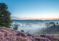 nature, fog, morning, field, heather, hill wallpaper