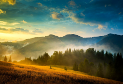 carpathians, ukraine, landscape, mountains, tree, mist, nature wallpaper