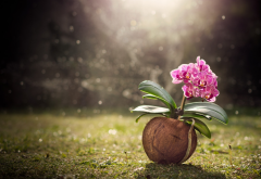 coconut, flower, nature, grass, orchid wallpaper