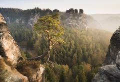 cliff, nature, landscape, tree, mountains, rock, bastei, elbe sandstone mountains, germany, saxon switzerland wallpaper