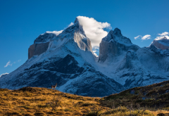patagonia, chile, guanaco, mountains, nature, peak, clouds wallpaper