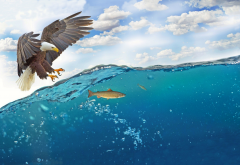 fidhing, hunting, eagle, fish, sea wallpaper