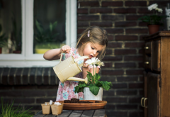 child, girl, house, window, pot, flower, watering can, watering wallpaper