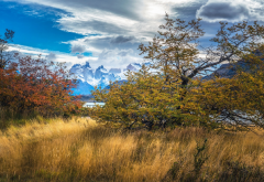 grass, tree, mountains, sky, patagonia, chile, nature wallpaper