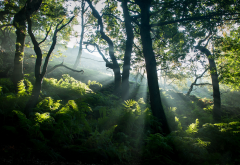 nature, summer, tree, forest, fern, sun rays wallpaper