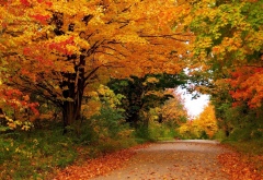 autumn, road, yellow tree, tree, forest, nature, leaf wallpaper