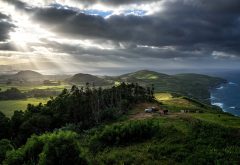 meadow, azores, portugal, landscape, nature, cow, clouds, tree, sea, island wallpaper