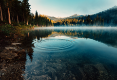 caumasee, switzerland, forest, nature, lake, morning, fog wallpaper