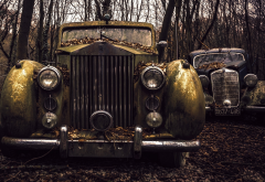 rolls-royce, cars, retro car, rusty car, forest wallpaper