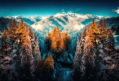 winter, forest, snow, nature, landscape, mountains, tree wallpaper