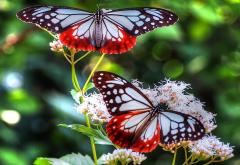 butterfly, bright, flower, insect, animals wallpaper