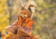 animals, squirrel, boots, autumn, leaves, nature wallpaper