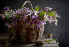 basket, flowers, cone, nature wallpaper