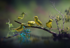 nature, water, branch, bird wallpaper