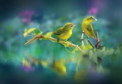 birds, couple, branch, leaves, water, silvereye, animals wallpaper