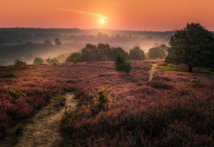 nature, landscape, hill, fog, heather, sunrise, flowers wallpaper