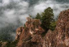 on the edge, spruce, rocks, cliff, fog, clouds, nature wallpaper