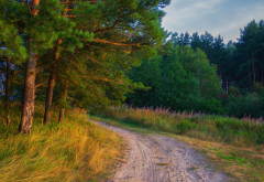 forest, pine, road, nature, russia, tree, forest wallpaper