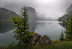 morning, lake, fir, mountains, fog, nature wallpaper