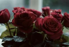 red flowers, rose, flowers, red roses, bouquet wallpaper