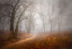 forest, tree, fog, path, autumn wallpaper