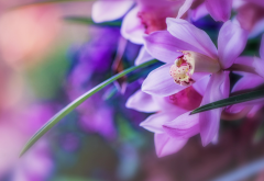 orchids, petals, flowers, nature, macro wallpaper