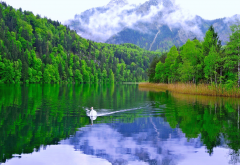 swan, lake, mountains, nature, bird wallpaper
