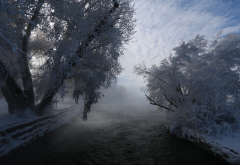 winter, tree, hoarfrost, river, nature, snow wallpaper