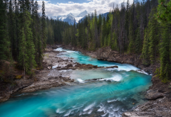 yoho national park, rocky mountains, canada, mountain river, canada, forest, river, tree, nature wallpaper