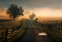 tree, road, dirt road, sky, fog, nature, field wallpaper