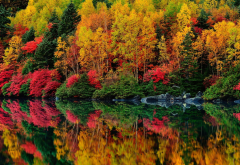 lake, forest, autumn, trees, reflection wallpaper