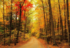 autumn, leaf, nature, forest, country road wallpaper