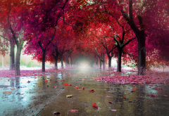 wet, autumn, leaf, tree, park, pink leaves, nature wallpaper