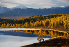 altai, mountains, autumn, lake, nature, forest wallpaper
