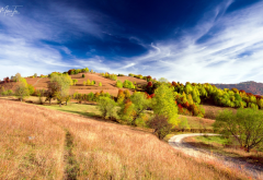 field, hills, tree, sky, autumn, nature wallpaper
