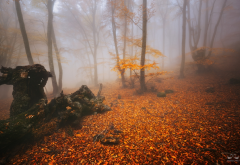 forest, trees, fog, autumn, nature, leaf wallpaper