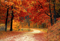 autumn, tree, leaf, leaf fall, forest, leaves, nature wallpaper