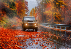 autumn, nature, road, tree, leaves, fog, leaf, cars,  wallpaper