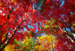 autumn, nature, tree, leaves wallpaper