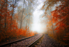 autumn, railway, tree, fog, haze, leaves, autumn colors, nature wallpaper